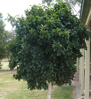 mop-top-trees-10.jpg