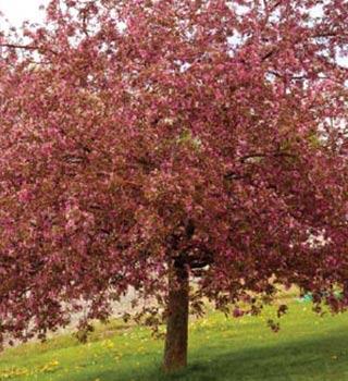 Gardenarium Deciduous Trees