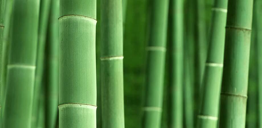 Gardenarium Bamboos