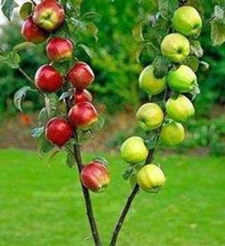 fruit-trees-2.jpg