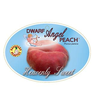 Dwarf Angel Peach