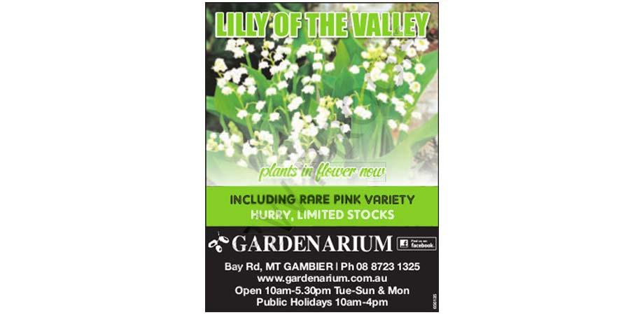 lilly-of-the-valley.jpg