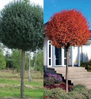 mop-top-trees-8.jpg